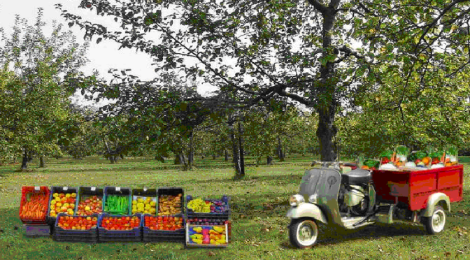 commercializzazione_prodotti_agricoli