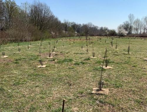 C&A_Mille alberi nell'oasi di Lacchiarella (MI), inaugurazione dell'intervento di forestazione
